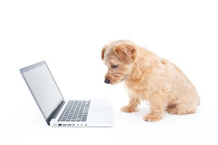 ノートパソコンと犬